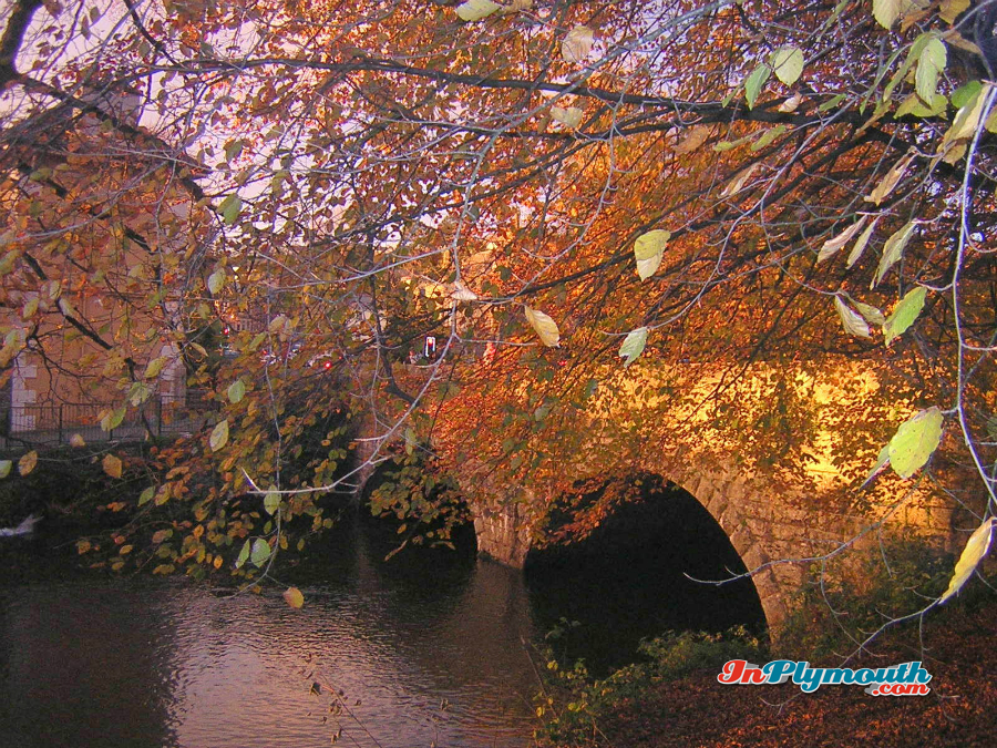Autumn leaves in Tavistock